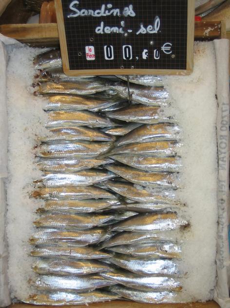 marche sardine
